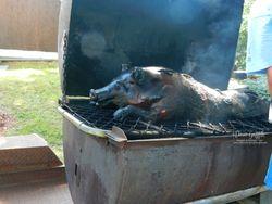 Pig roast #1