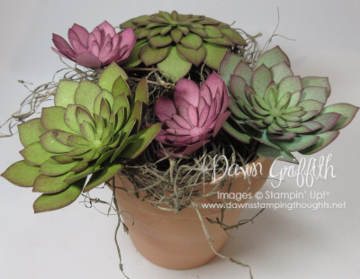 How to make paper Succulents with Dawn Griffith